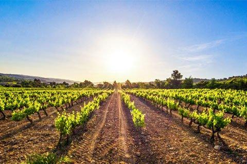 Champagne Vineyards Visit