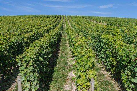 Loire Valley Vineyards Visit