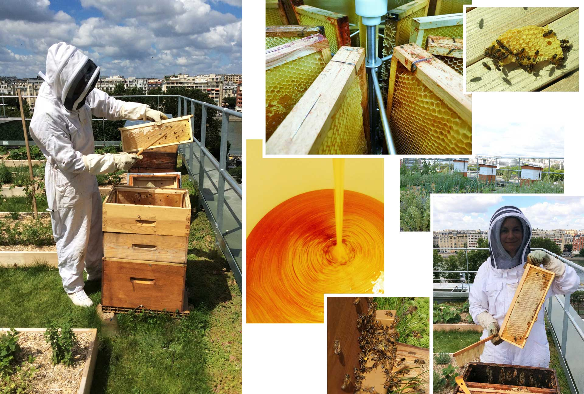 honey harvest on Le Cordon Bleu Paris rooftop